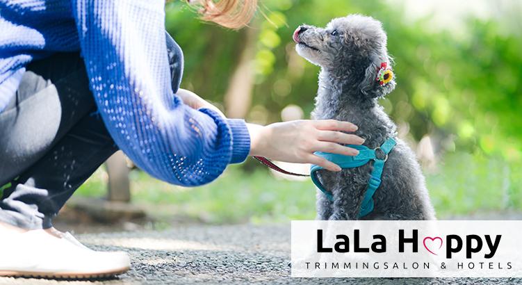 横浜で働こう★オープニングメンバー募集!!2021年3月OPEN予定のペットサロン「LaLa Happy 青葉店」